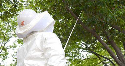 蜂駆除の協力店募集